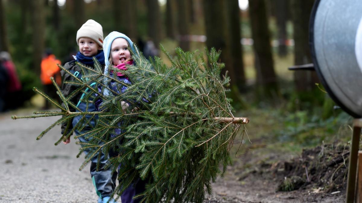 Landkreis Augsburg: Sind die Christbäume fit für Weihnachten ...