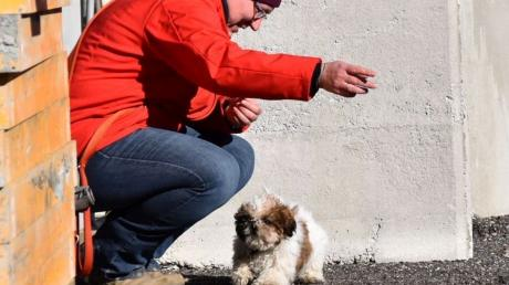 Rettungshunde-Casting%20Mittelneufnach2.jpg