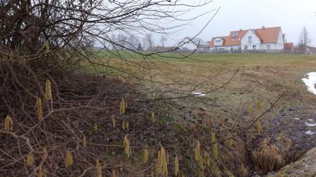 """Auf dieser Wiese am """"Röstergraben"""" in Walkertshofen soll ein neues Baugebiet entstehen."""