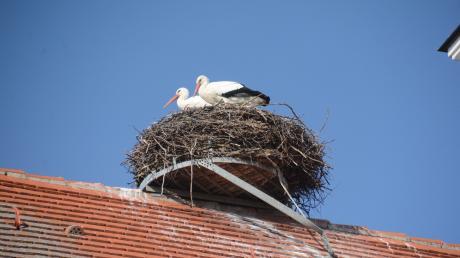 Hoch oben auf dem Dach der St. Johannes-Baptist-Kirche in Gennach residiert auch heuer wieder ein Storchenpaar. Ob es wohl schon den Nachwuchs ausbrütet?