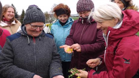 Ihr Wissen über Kräuter geben die Expertinnen Hermine Gattinger (vorne links) und Gisela Deschler (Dritte von rechts) gerne an die Teilnehmer der Kräuterwanderung weiter.