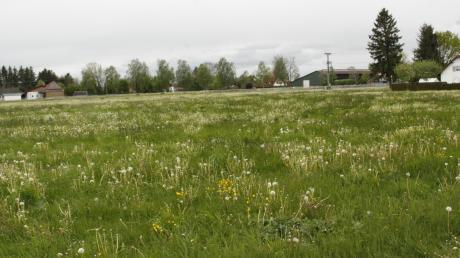 Diese Wiesen am nordwestlichen Ortsrand von Gennach sind Weideland und haben keine naturschutzfachliche Wertigkeit.