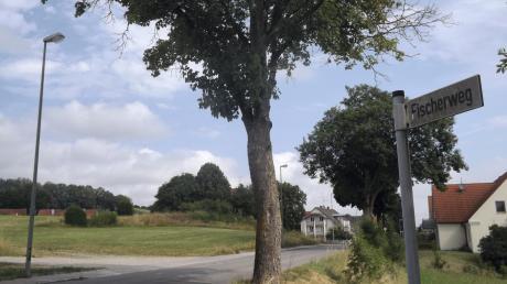 Auf dieser Grünfläche in Langenneufnach soll bald ein neuer Edeka-Supermarkt errichtet werden.