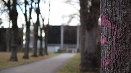Es ist schon angezeichnet: Viele Bäume um den Spielplatz in der Röthstraße müssen entfernt werden. Das will die Gemeinde möglichst schnell erledigen. Alle gesunden Bäume sollen jedoch stehen bleiben, entscheidet der Gemeinderat.