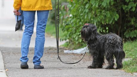 Die Aislinger Gemeinderäte diskutierten unter anderem darüber, ob die Aschberggemeinde Hundekotbeutelspender aufstellen soll.