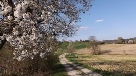 Jetzt im Frühjahr sind die Bäume auf dem Streuobstweg in voller Blüte.