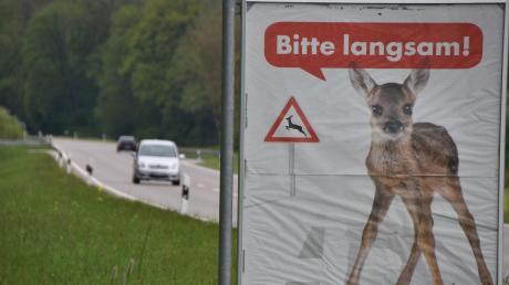 Langsam fahren bei Wildwechsel.