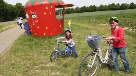 Selbst gepflückt und schnell wieder nach Hause: Caroline Thannheiser und ihr sechsjähriger Sohn Valentin lieben die frischen Erdbeeren vom Seibold-Feld beim Hiltenfinger Keller.