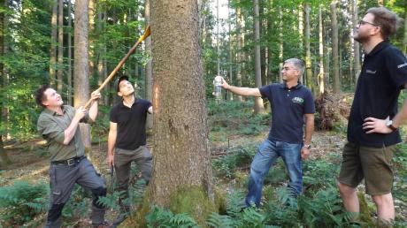 Christoph Pascher, Simon Brandner, Philipp Hanner und Lorenz Hochhauser (von links) erklären an befallenen Bäumen die Merkmale des Borkenkäfers.