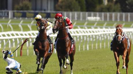 Gefährlicher Sport: Ein Jockey ist bei einem Rennen in Australien von seinem Pferd gefallen. Seit 2000 sind in Australien 20 Jockeys ums Leben gekommen. Foto (Archiv) Daniel Munoz/AAP Foto: Daniel Munoz