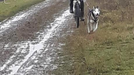 """Nachdem Niclas Speer auf dem Fahrrad zusammen mit dem Sibirischen Husky Jim auf dem fünf Kilometer langen Rundkurs in Ungarn unterwegs gewesen war, gab es Streicheleinheiten für den vierbeinigen Partner. Zusammen belegten sie bei der Europameisterschaft """"off snow"""" den siebten Platz."""