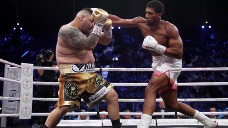 Anthony Joshua (r) ist durch einen einstimmigen Punktsieg über Andy Ruiz Jr. wieder Weltmeister im Schwergewicht.