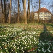 Es blüht so schön im Schlosspark in Unterwittelsbach.