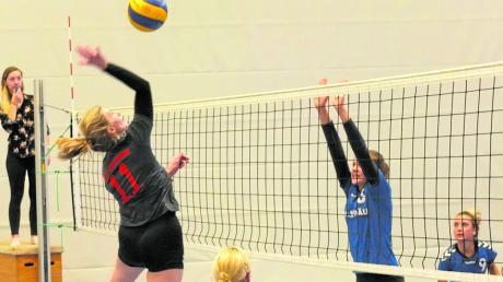 Könnten künftig eine Liga höher aufeinandertreffen: Die Volleyballerinnen des TSV Aichach (graue Trikots) und des TSV Inchenhofen.