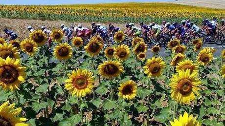 Egal, was passiert: Die Sonnenblummen als Tourbegleiter bleiben.