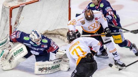 Die Eisbären Berlin um Torwart Mathias Niederberger (l) treffen auf die Grizzlys Wolfsburg.