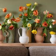 Tulpen in der Vase gehören für viele zu Ostern als Dekoration ins Haus. Doch braucht sie nun viel oder wenig Wasser? Wie verraten, wie Blumen in der Vase länger halten.