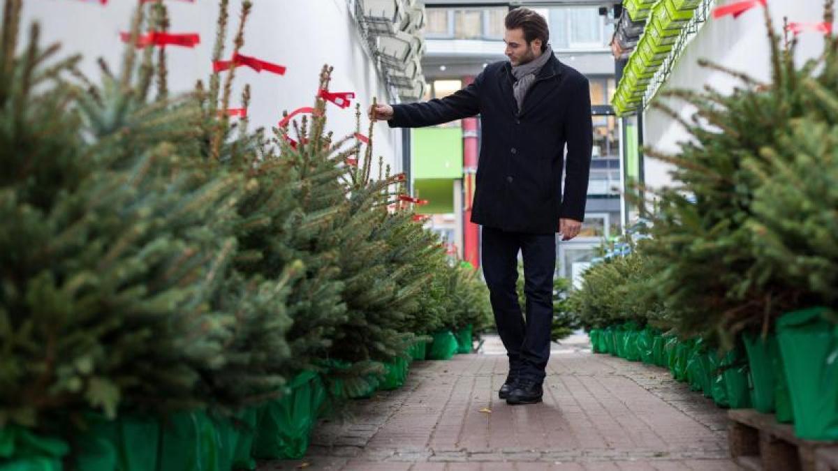 kein wegwerfprodukt so berlebt der weihnachtsbaum im. Black Bedroom Furniture Sets. Home Design Ideas