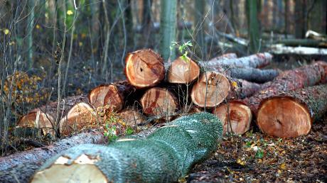Oberelchingen - Forstarbeiten - Baum - Bäume - Baumfällung - Baumfällungen - Wald - Waldarbeit - Waldarbeiten