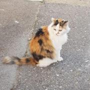 Katze_2(1).jpg