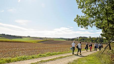 Über Feld- und Waldwege, am Wald entlang oder mitten durch, führt ein Großteil der Wegstrecke durch die schöne Landschaft, hier mit Blick in Richtung Zusamaltheim.