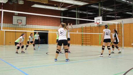 """Die Mixed-Volleyballgruppe """"Zusamfrösche"""" vom TSV Wertingen beim Training in der Sporthalle der Realschule Wertingen. Die Mannschaft will noch mehr Mitspieler. Vor allem an Männern und einem Trainer fehlt es der Truppe."""