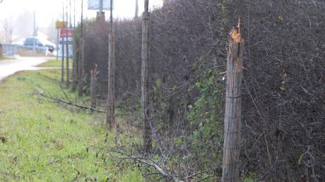 Unbekannte haben in der Nacht von Samstag auf Sonntag zwei junge Bäume in der Wertinger Laugnastraße kaputt gemacht. Dabei müssen sie erhebliche Gewalt angewendet haben.