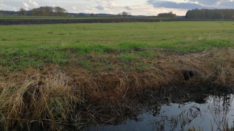 Natur muss sich zwischen vielen landwirtschaftlichen Flächen behaupten.