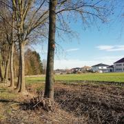 Hier am Ortsrand von Wertingen, nahe der Eisenbachsiedlung, wurde eine Schlehdornhecke radikal abgeholzt.