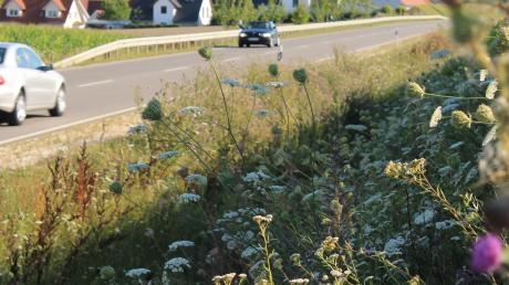 Blühflächen entlang von Straßen sollen Lebensraum für Insekten bieten.
