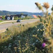 Wildblumen entlang der Staatsstraße nach Roggden locken Insekten an. Naturfreunde schätzen das. Manche Bewohner angrenzender Siedlungen allerdings haben ein Problem damit.