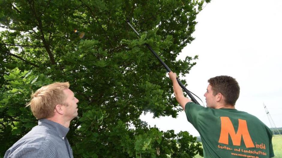 Klettergurt Für Baumpflege : Arbeit baumpflege in schwindelnder höhe und am boden wirtschaft