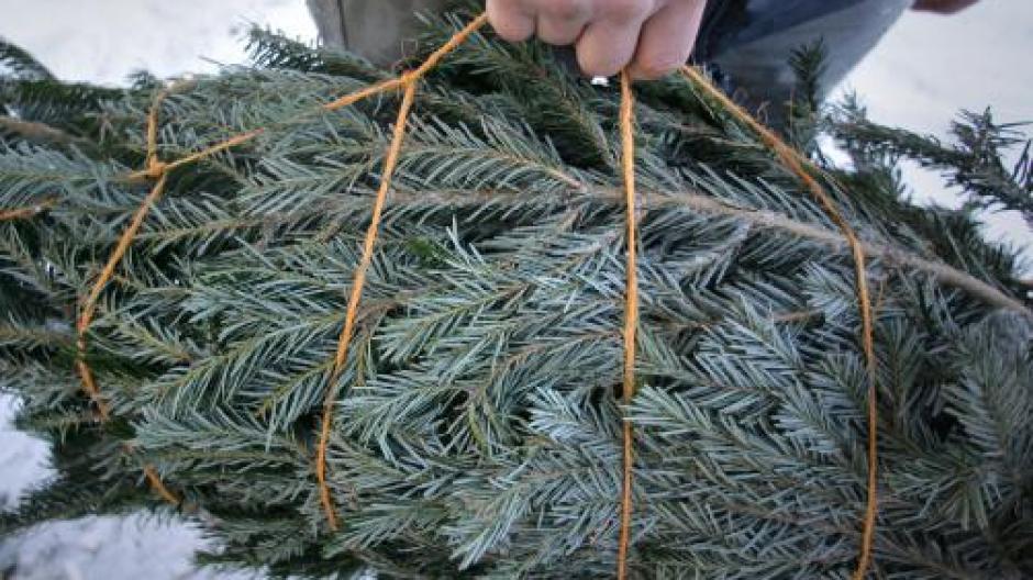 Weihnachtsbaum Nadeln.Weihnachten So Hält Sich Der Christbaum Besonders Lang Wirtschaft