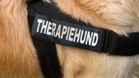 Lehrer können die Kosten für einen im Unterricht eingesetzten Therapiehund nach Auffassung des Finanzgerichts Münster von der Steuer absetzen. Foto: Jens Büttner