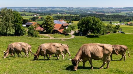 Unter Milchbauern boomt Bio. In der jüngsten Vergangenheit stellen immer mehr Landwirte ihre Betriebe um. Das Problem: Die Milch wird nicht im gleichen Maße nachgefragt.