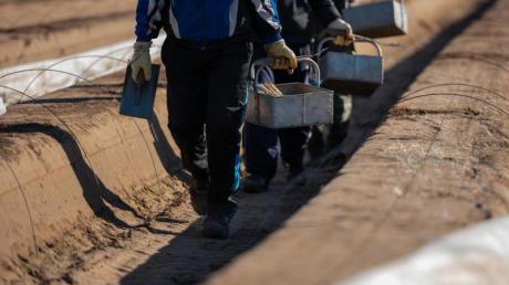 Wegen der Corona-Krise fehlen viele Saisonarbeitskräfte in der Landwirtschaft. Aber auch in anderen Branchen könnten jetzt Kurzarbeiter einspringen. Die Zuverdienstgrenzen wurden daher angehoben.