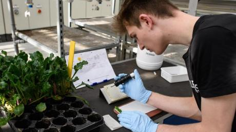 Proben nehmen, Versuchsreihen dokumentieren: Als angehender Pflanzentechnologe arbeitet Ole Peters an der Entwicklung und Zucht neuer Pflanzen mit.