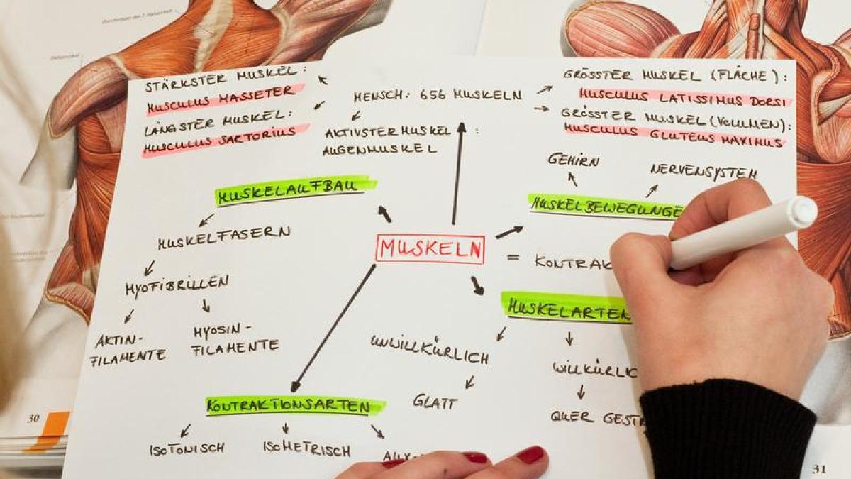 Beste Wie Man Studiert Anatomie Effektiv Bilder - Anatomie Ideen ...