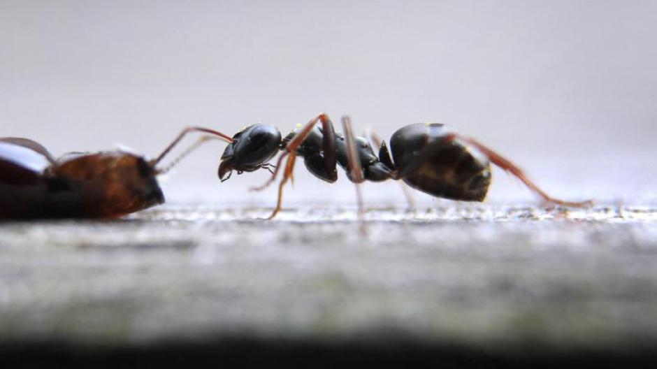 Ameisen im wohnzimmer fliegende ameise krabbelt aus ihrem nest emejing ameisen im wohnzimmer - Ameisen in der wand ...