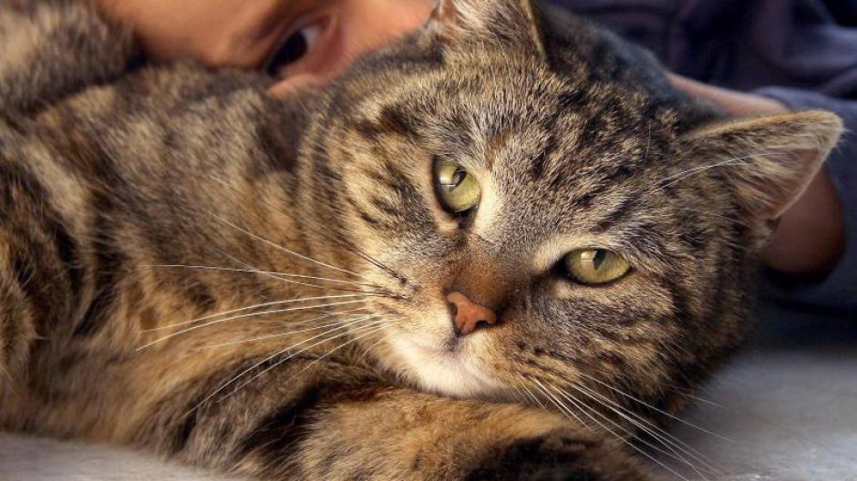 Infektionskrankheiten Haustiere Vorsicht Beim Kuscheln Promis