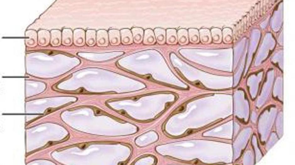 Neues Organ?: Mediziner entdecken unbekannte Struktur im Körper ...