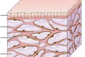 Mediziner entdecken unbekannte Struktur im Körper