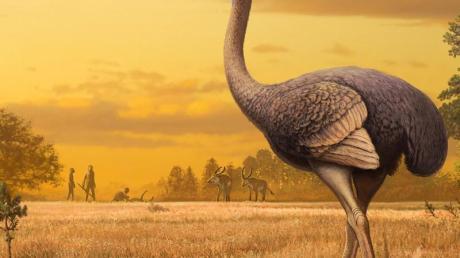 Forscher haben auf der Halbinsel Krim am Schwarzen Meer Überreste eines riesigen frühzeitlichen Vogels entdeckt. Das straußenähnliche Tier sei mindestens 3,5 Meter groß gewesen.