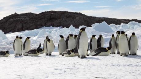 Geht die Erderwärmung so weiter wie derzeit, dann würde die Zahl der Kaiserpinguine um mehr als 80 Prozent sinken, schreiben Forscher in einer neuen Studie. Foto: Stephanie Jenouvri/Woods Hole Oceanographic Institution/dpa