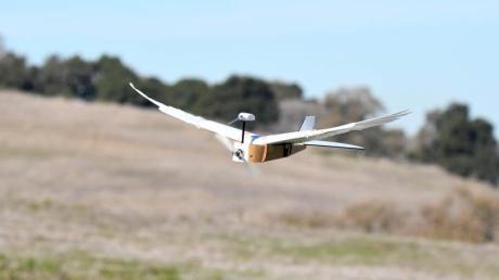 Forscher haben einen Flugroboter mit echten Taubenfedern entwickelt. Es gelang ihnen sogar, das Fluggerät mit Hilfe von künstlichen Gelenken zu steuern.