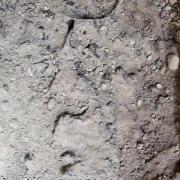 Forscher haben unweit des Vesuv dunkle, glasartige Fragmente eines Gehirns ausgegraben.