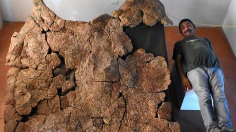 Der venezolanjische Paläontologe Rodolfo Sánchez liegend neben dem Panzer eines Stupendemys geographicus Männchens.