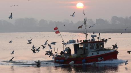 Ostsee und Nordsee haben sich in den vergangenen Jahrzehnten deutlich erwärmt.