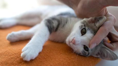 Katzen führen eher ein eigenes Leben.