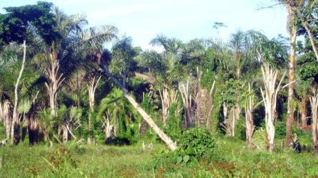 Abholzung von Wald in der Nähe des Dorfes Masaba südöstlich der ugandischen Hauptstadt Kampala. Afrika ist in den vergangenen zehn Jahren zum Brennpunkt der weltweiten Waldverluste geworden.